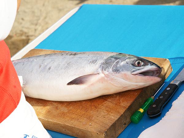 鮭解体のお勉強